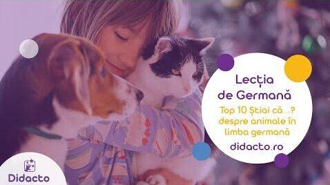 Top 10 informatii despre animale in germana